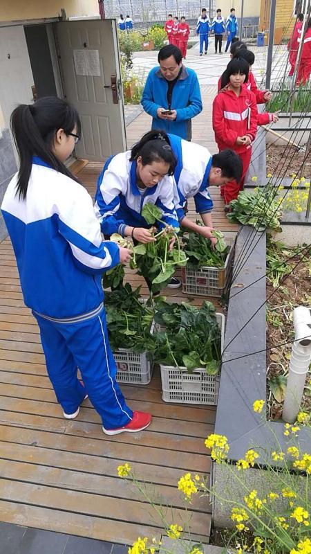 学生在采摘青菜 (3).jpg