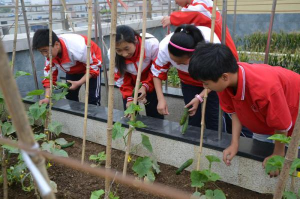 学生在采摘黄瓜.jpg